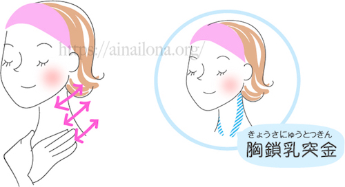 顔層筋マッサージ・胸鎖乳突筋